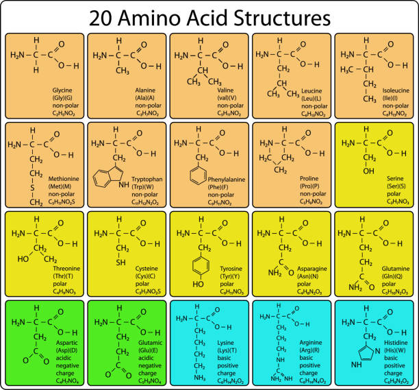 Animo Acid skeletal Structure Animo Acid skeletal Structure amino acid stock illustrations