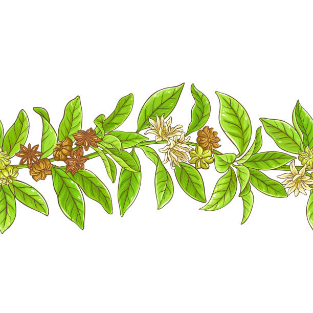 anise branches pattern vector art illustration