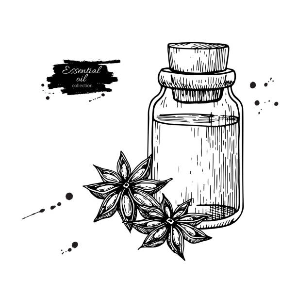 Anise star essential oil bottle and heap of spices. Hand drawn vector illustration. vector art illustration