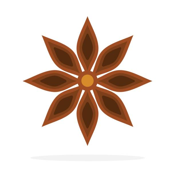 Anise star flower flat isolated One Dry anise flower vector flat material design isolated on white star anise stock illustrations