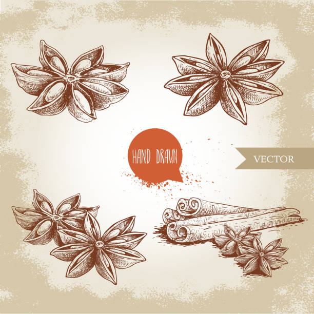 Anise star sketches set. Single, batch and composition with cinnamon sticks. herbs and condiment retro style hand drawn collection. Vector illustrations. vector art illustration