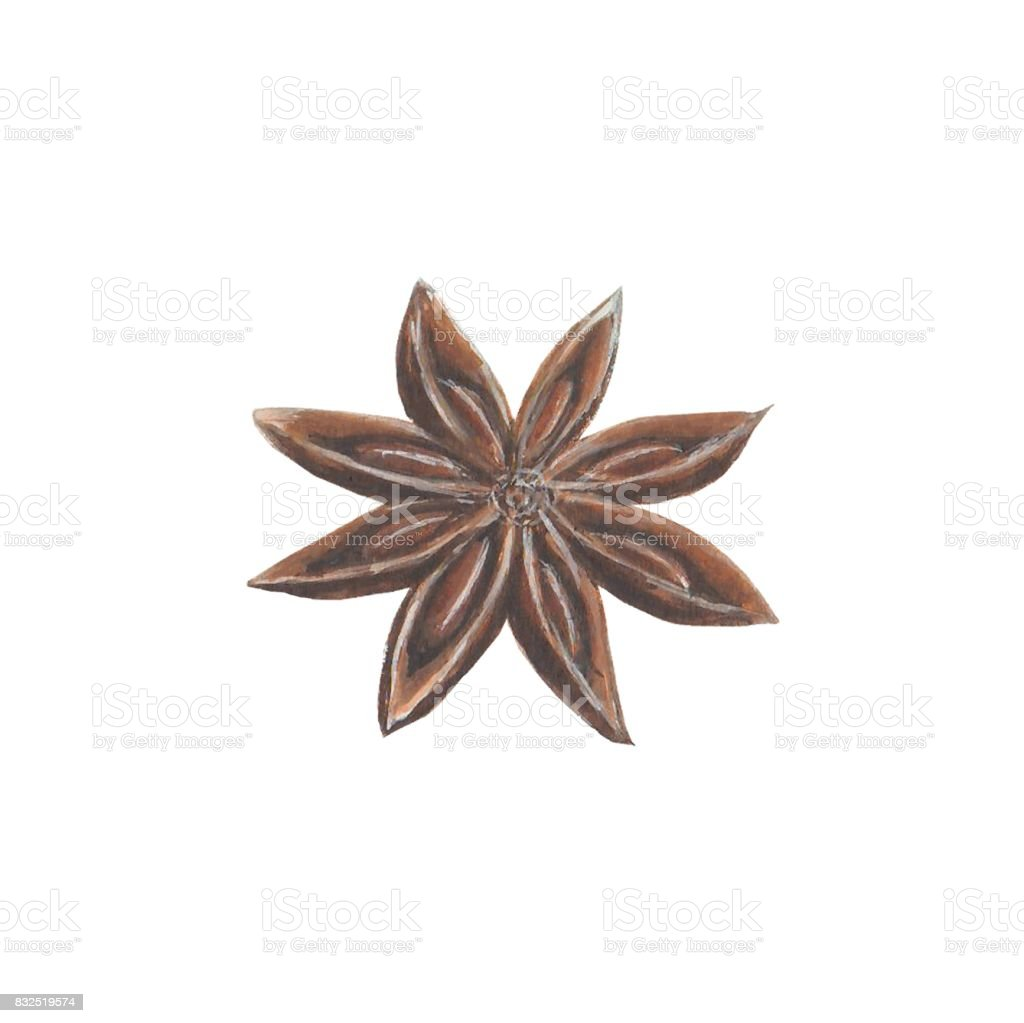 Anise star spice vector art illustration