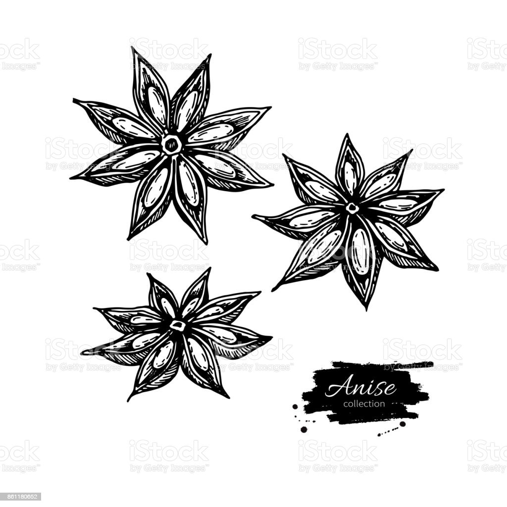 Anise Star Vector drawing. Hand drawn sketch. Seasonal food illustration isolated on white. vector art illustration