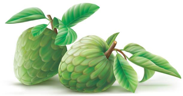 annona cherimoya früchte mit kuhmist - vanillesauce stock-grafiken, -clipart, -cartoons und -symbole