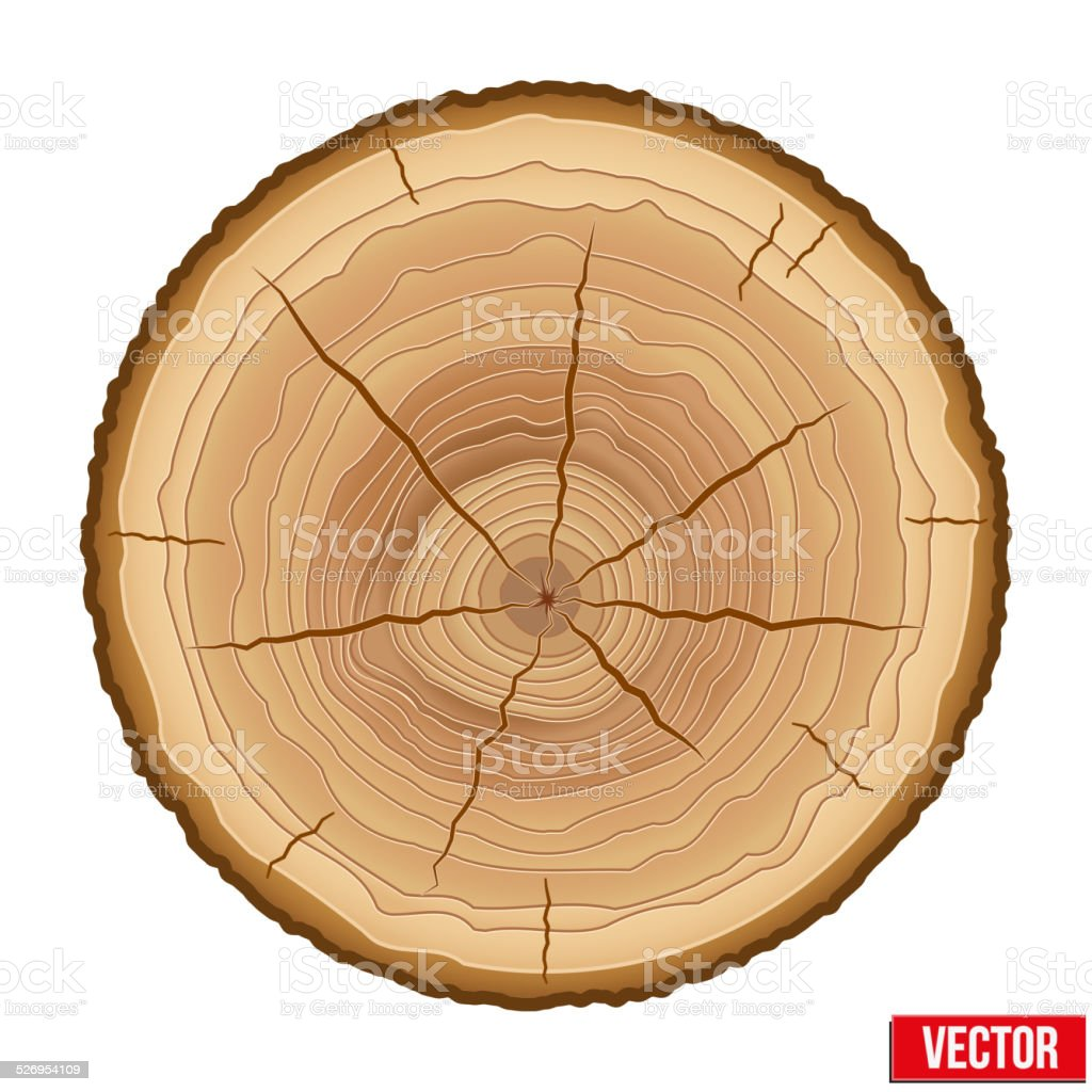 Annual Tree Growth Rings Of The Crosssection Wood Trunk