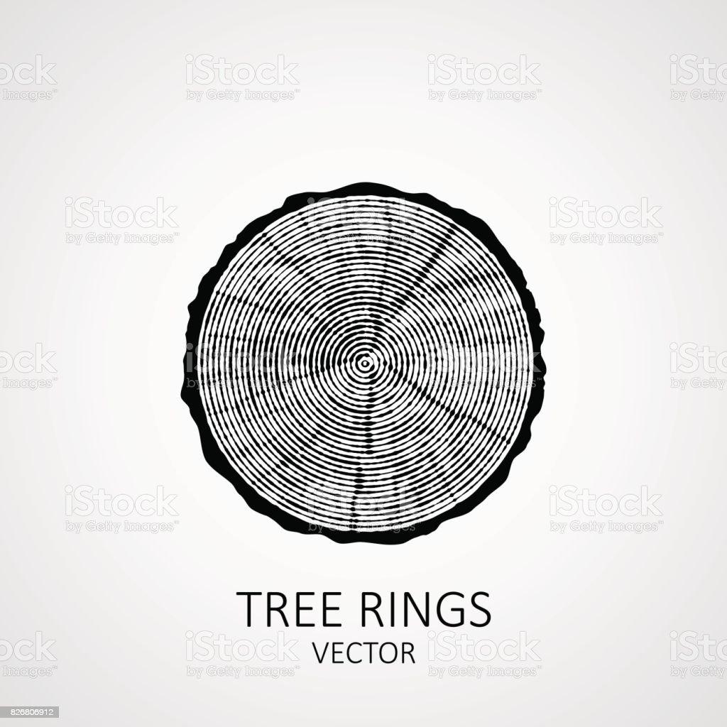 Annual tree rings. Saw cut tree trunk vector art illustration