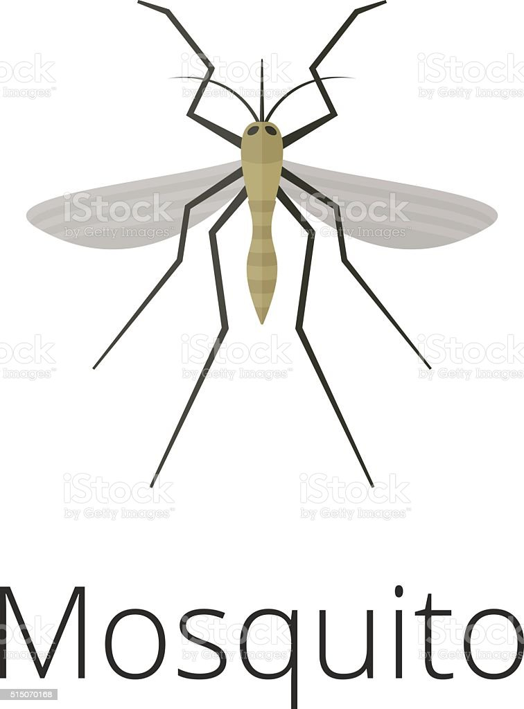Anopheles mosquito vector illustration vector art illustration