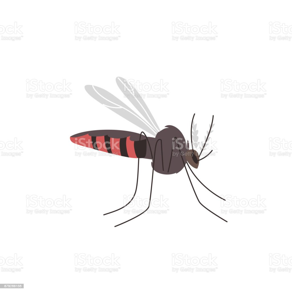 Anopheles mosquito, zika, denge, malaria carrier vector art illustration