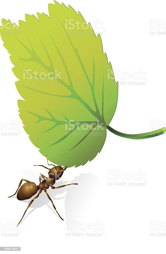 ant and leaf royalty-free ant and leaf stock vector art & more images of animal