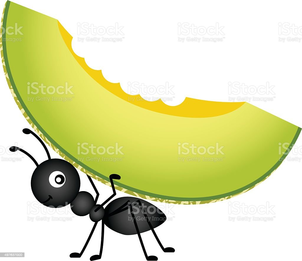 Ant carrying a cantaloupe melon vector art illustration