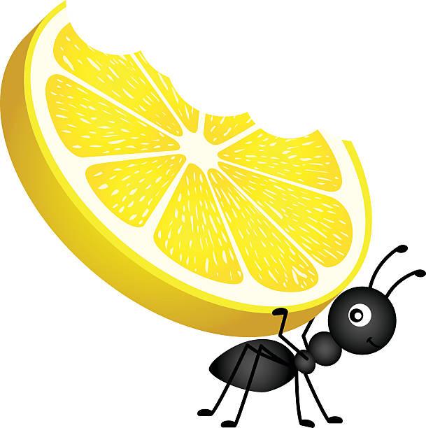 Ant carrying a lemon vector art illustration