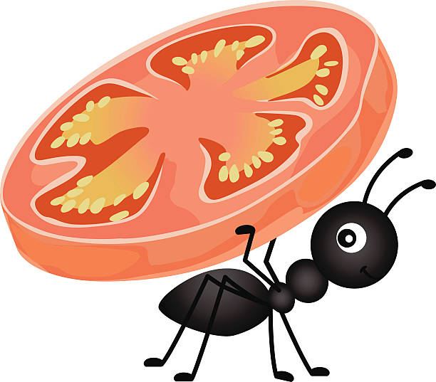 Ant carrying a slice tomato vector art illustration