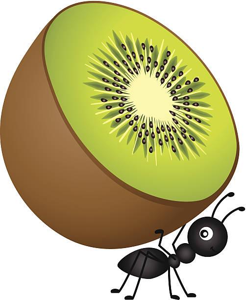 Ant Carrying Kiwi vector art illustration