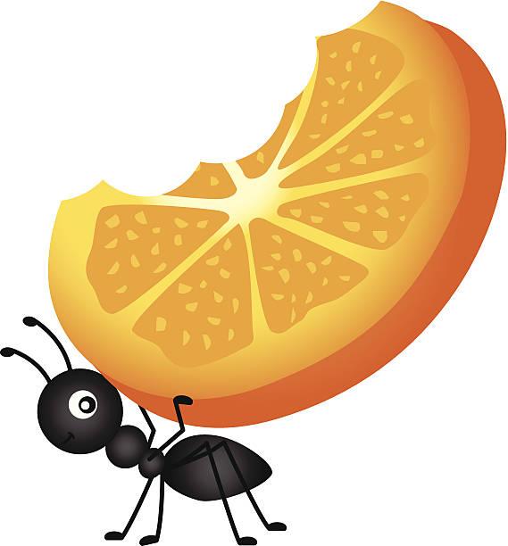 Ant Carrying Orange Slices vector art illustration
