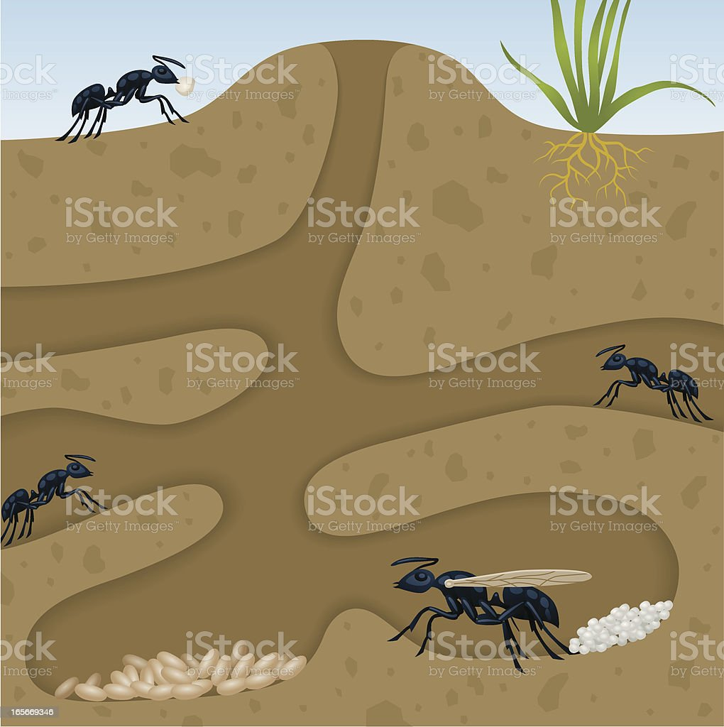 Ant Colony vector art illustration