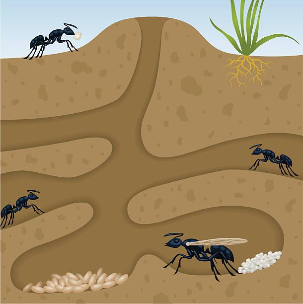 Ant Colony vector art illustration