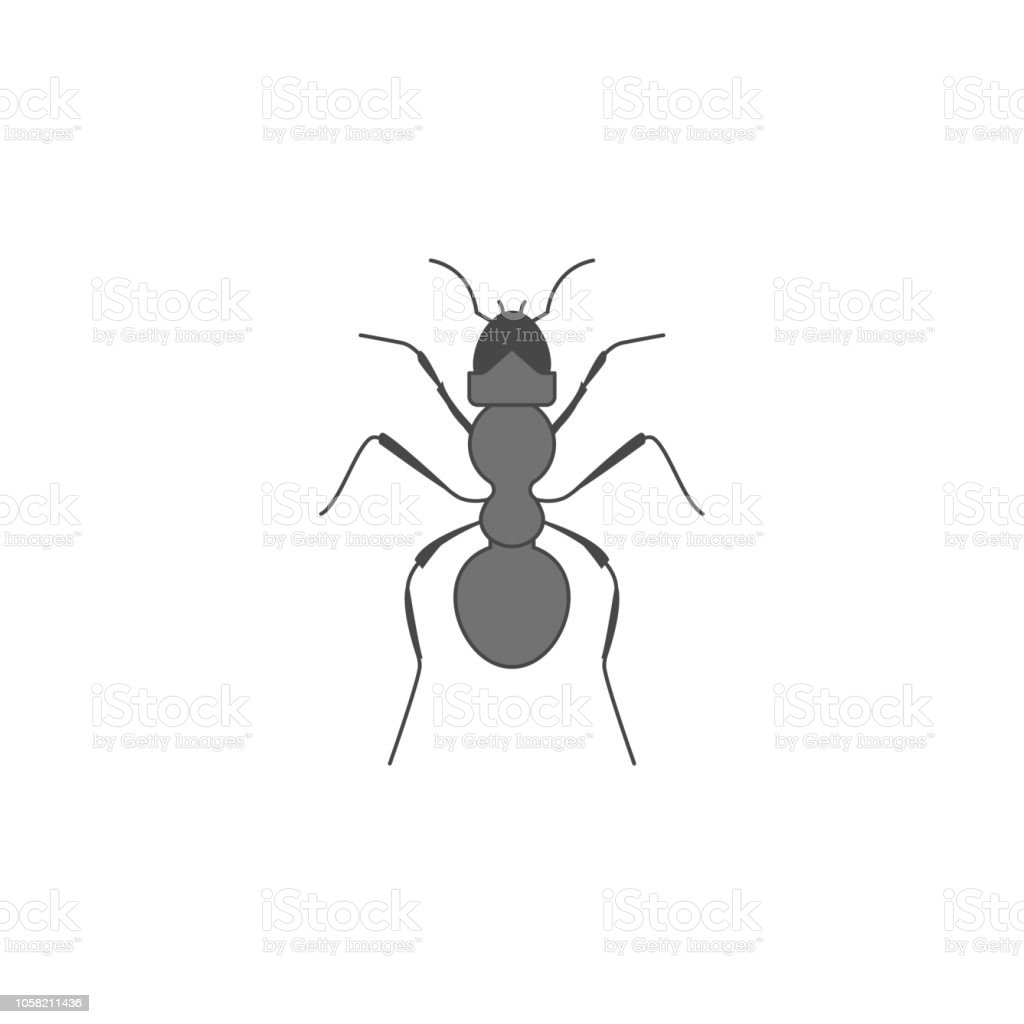 Ant Colored Outline Icon One Of The Collection Icons For