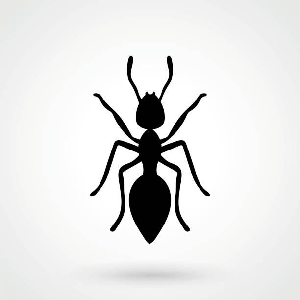 ant icon vector art illustration