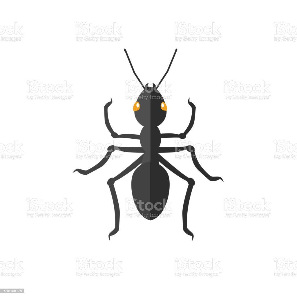 Ant Icon Vector vector art illustration