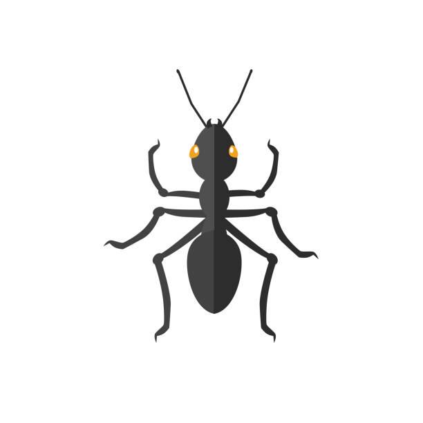 Ant Icon Vector vector art illustration
