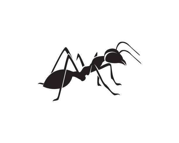 Ant Logo template vector illustration design vector art illustration