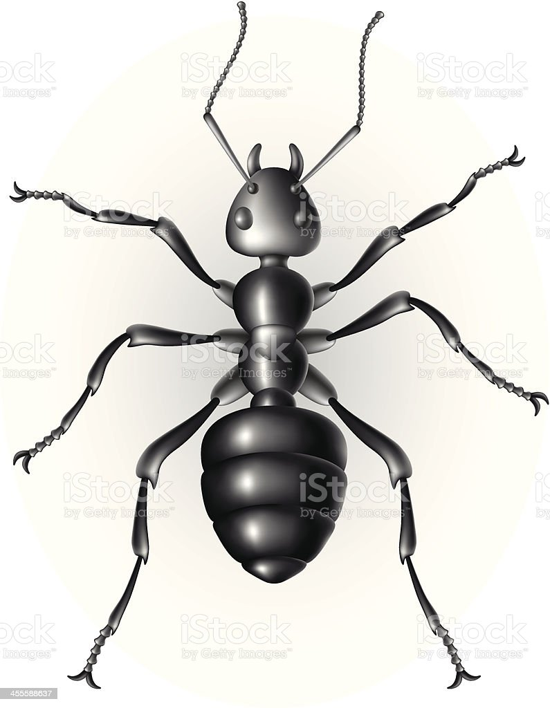 Ant royalty-free ant stock vector art & more images of animal