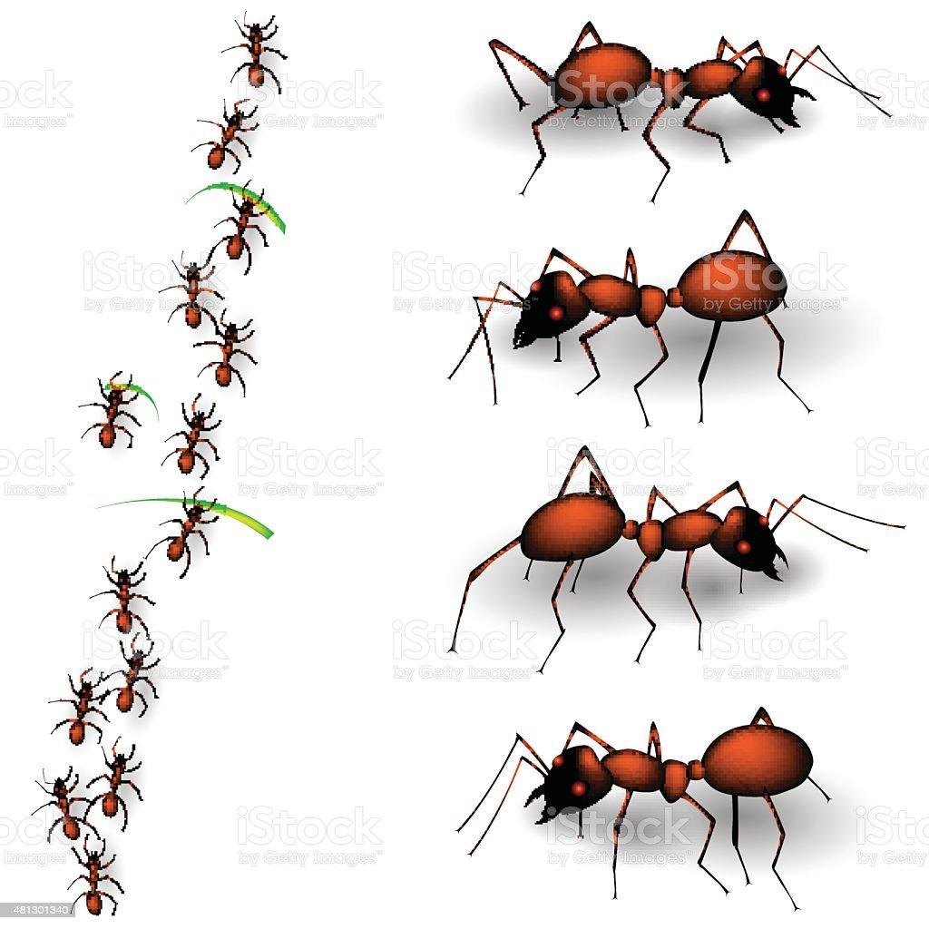 Ant vector art illustration
