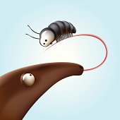 Ant-eater and the beetle on a light background.