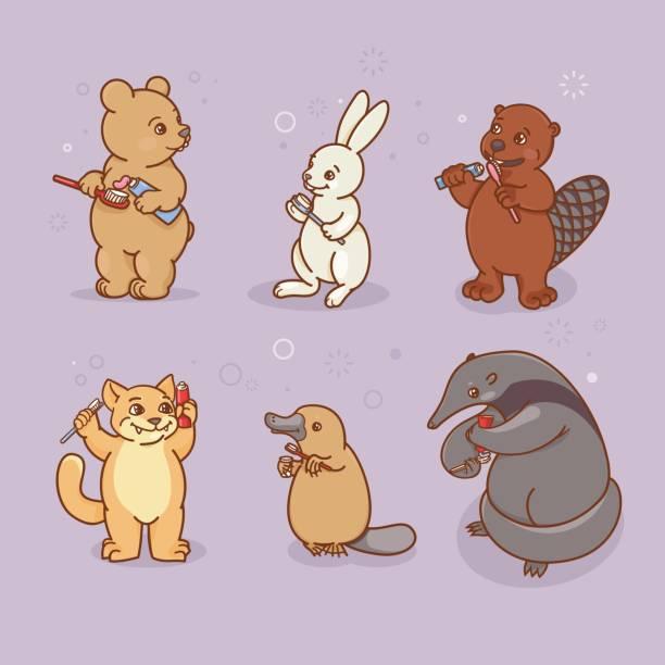 bildbanksillustrationer, clip art samt tecknat material och ikoner med ant-eater, platypus, hare, bäver, katt och björn borsta sina tänder och... näbb. - platypus