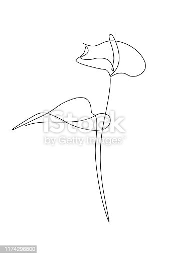 Anthurium flower in continuous line art drawing style. Minimalist black line sketch on white background. Vector illustration