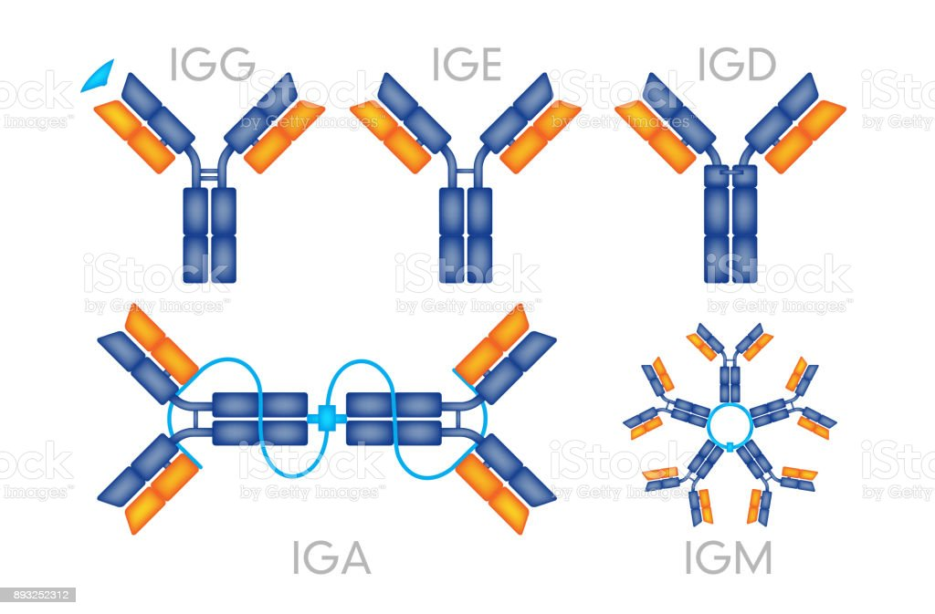 Antibodies antigen various forms on white background vector vector art illustration