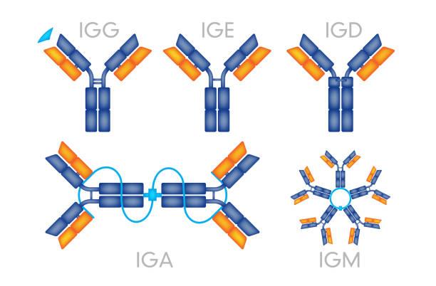 Antibodies antigen various forms on white background vector vector art illustration