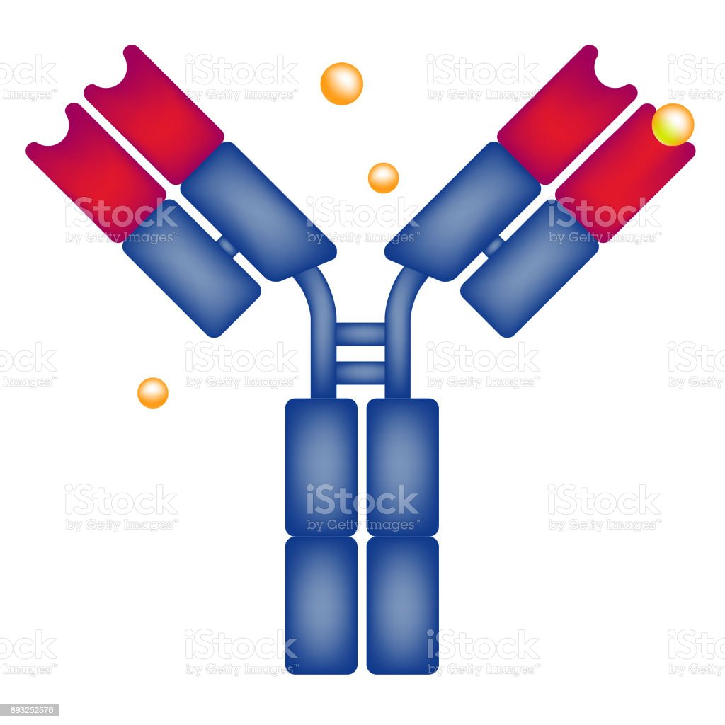 Antibody antigen drug science vector art illustration