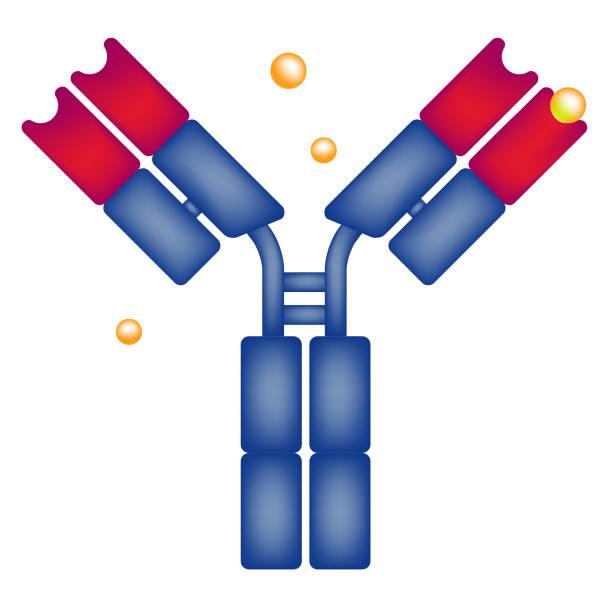 Antibody antigen drug science vector art illustration