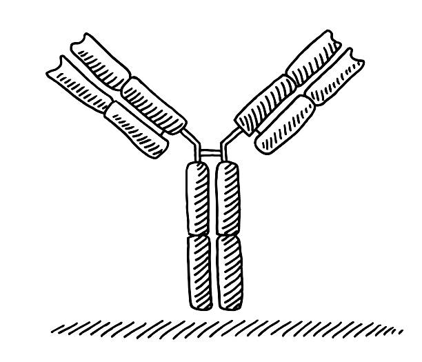 Antibody Medical Drawing vector art illustration