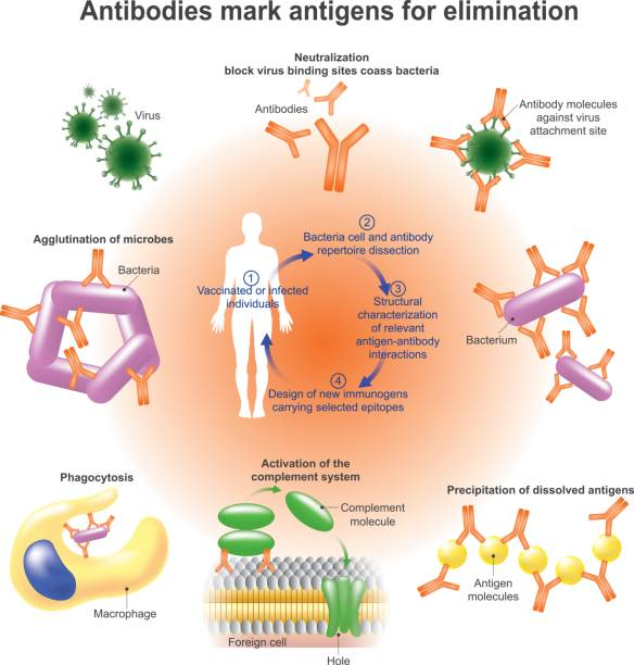 Antibody. vector art illustration