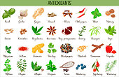 Set of Food sources natural antioxidants to neutralize free radicals, herbs and spices. healthy lifestyle. anthocyanins. For cooking, lifestyle, Herbal and alternative medicine, health care. Vector