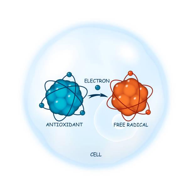 ilustraciones, imágenes clip art, dibujos animados e iconos de stock de antioxidante, representación de vector abstracto principio de trabajo - antioxidante