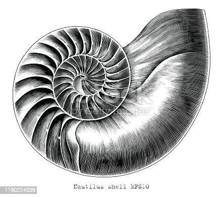 istock Antique engraving illustration of Nautilus shell hand draw black and white clip art isolated on white background 1190224339