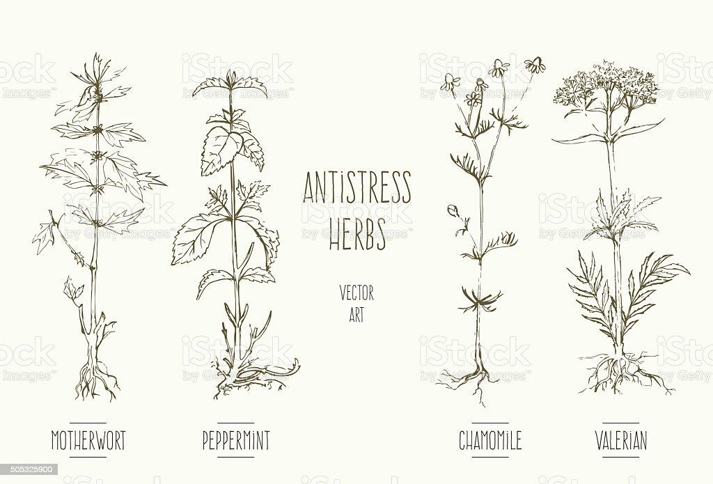 Antistress herbs vector art illustration