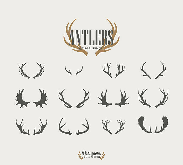 antler collection - deer antlers stock illustrations, clip art, cartoons, & icons