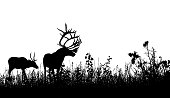 Silouette of an elk in his natural habitat with wild grass