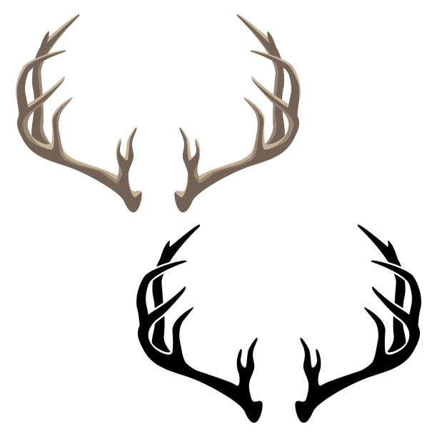 Antler Vector Illustration in both Color and Black Line Art Very sharp clean illustration of deer antlers, in both color and black line art for easy editing antler stock illustrations