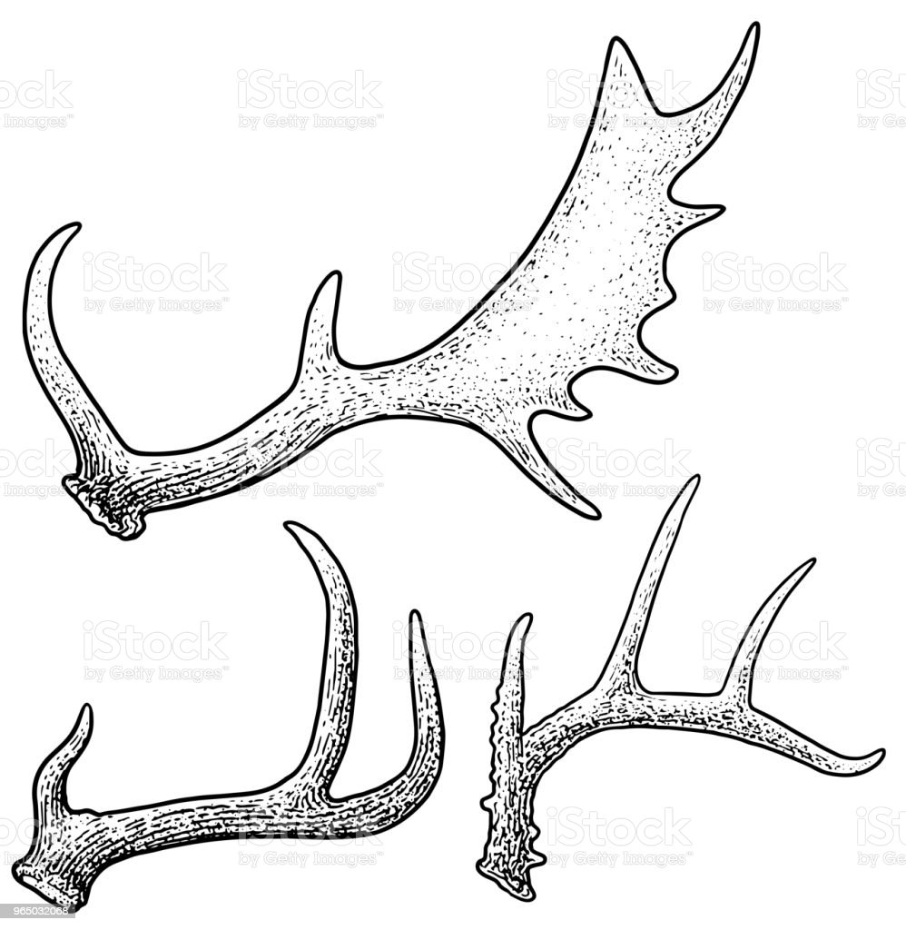 Antlers Illustration Drawing Engraving Ink Line Art Vector Stock ...