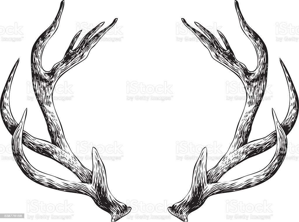 Antlers Stock Vector Art & More Images of Antler 538776156 ...