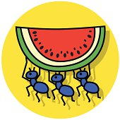 ants carry away watermelon