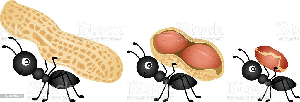 Ants carrying peanuts vector art illustration