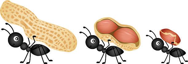 Ants carrying peanuts vector art illustration