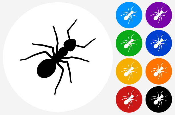 Ants Icon on Flat Color Circle Buttons vector art illustration