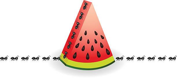 Ants on watermelon slice vector art illustration
